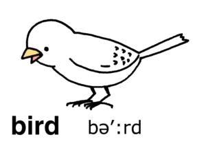 こども英語 bird