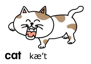 こども英語 cat