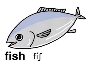 こども英語 fish