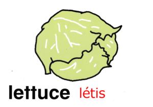 こども英語 lettuce