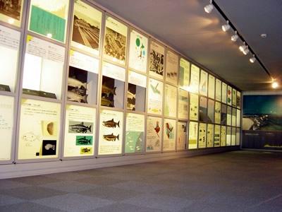 サケ展示室