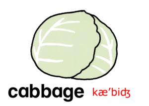 こども英語 cabbage