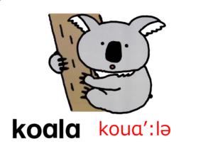 こども英語 koala