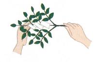 玉串奉奠の仕方1