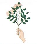 玉串奉奠の仕方2