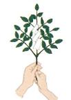 玉串奉奠の仕方3