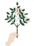 玉串奉奠の仕方4